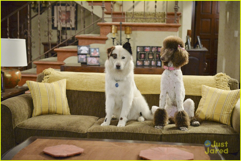 Stan The Puppies Keep Kidnapping Princess On Tonights