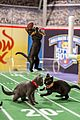 kitten bowl super bowl weekend pics 16