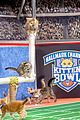 kitten bowl super bowl weekend pics 24