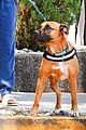 isabela moner walks dog weho 03