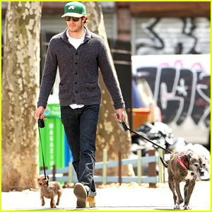 Adam Brody Walks His Dog Penny Lane & Leighton Meester's Dog Trudy in NYC