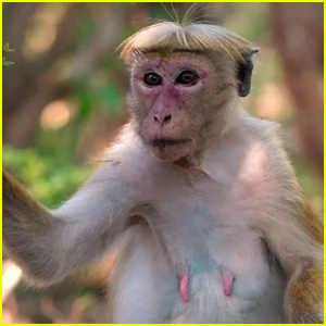 Cute monkey with new clothes  YouTube