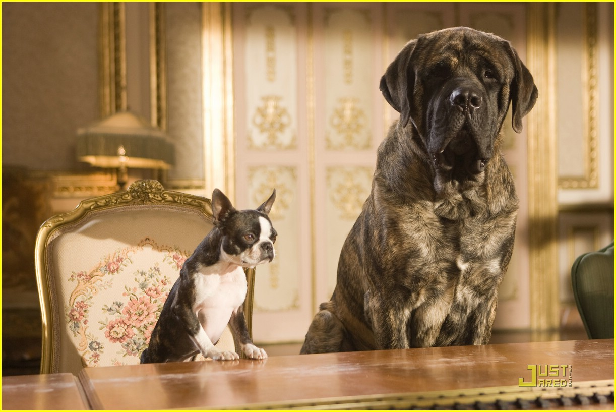 hotel for dogs movie stills 05