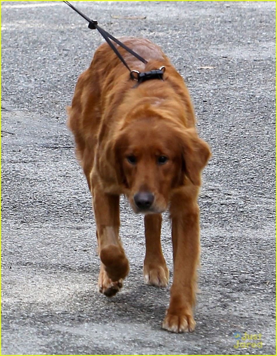 andrew garfield christmas eve dog walk 03