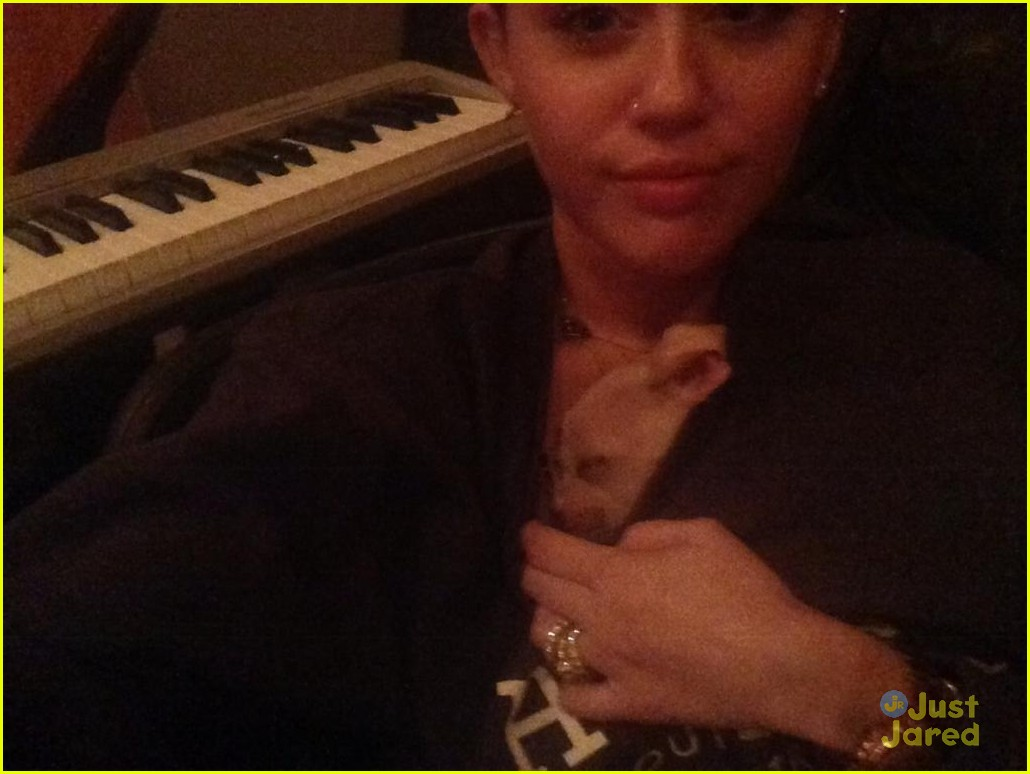 miley cyrus bean puppy 04